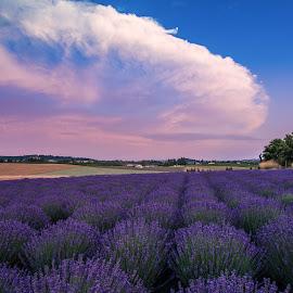 royal velvet sunset by Bob Applegate - Landscapes Prairies, Meadows & Fields ( clouds, sunset, summer, lavender, fields )