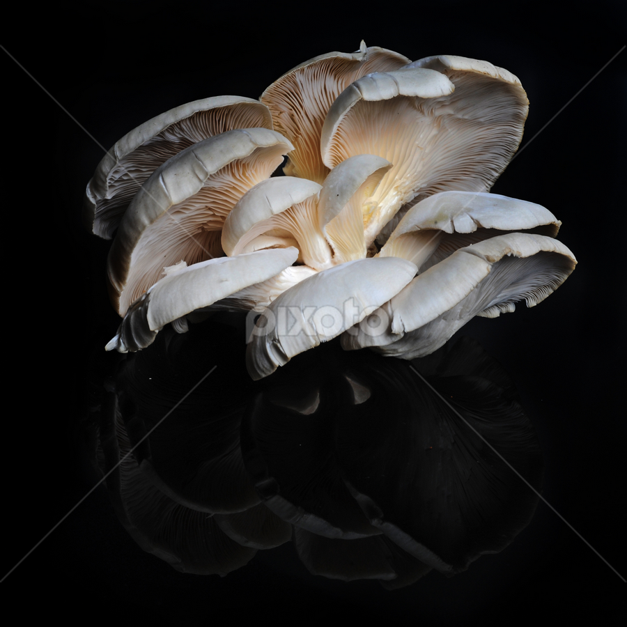 Zetas by Cristobal Garciaferro Rubio - Nature Up Close Mushrooms & Fungi