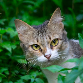 Nature Loving Cat by Vivek Chethan Muliya - Animals - Cats Portraits ( lookingatsomething, cats, animals, betweentheleaves, leaves, portraits )
