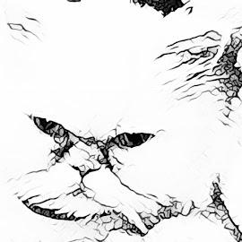Eyes if Distinction  by Roxanne Dean - Digital Art Animals (  )