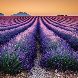 Valensole Plateau by David Long - Landscapes Prairies, Meadows & Fields ( provence, lavender, valensole )