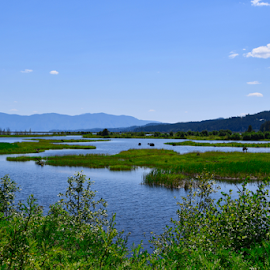 by Liz Rosas - Landscapes Prairies, Meadows & Fields ( waterfowl, mountains, creek, kootenai, waterway, northern idaho, river, idaho, swamp, trout creek, inlet )