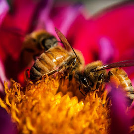 Pollinating Time by Dylan Dybdal - Nature Up Close Hives & Nests ( bees, colorful, summer, flowers, garden )