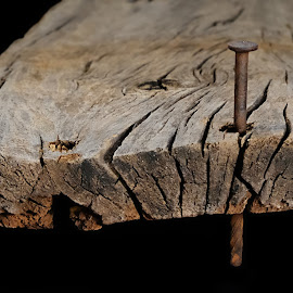 Nailed by Shawn Thomas - Artistic Objects Still Life