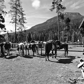 Horse Ranch in the Western USA by Michael Villecco - Animals Horses