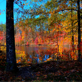 Pond on the Bike Trail by Vicki Pardoe - Landscapes Waterscapes ( autumn, fall, leaves, landscape, pond )