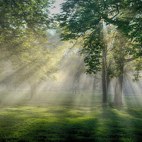 Rays through the trees by Pravine Chester - Nature Up Close Trees & Bushes ( photograph, park, nature, trees, sun rays,  )