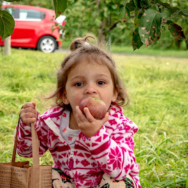 Apple Picking by Debbie Quick - Babies & Children Child Portraits ( apple, apple picking, debbie quick, tasting, vermont, eating, girl, debs creative images, apple tasting, child,  )