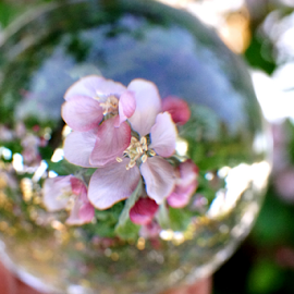 blossom by Shawn Chapman - Artistic Objects Glass