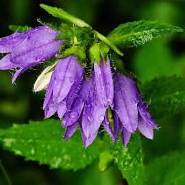 ... u lesa ... by Vláďa Lipina - Flowers Flowers in the Wild