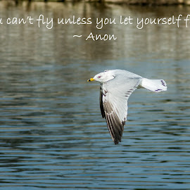 You Can't Fly Unless You Let Yourself Fall by Jennifer McWhirt - Typography Quotes & Sentences ( flying, animals, seagull, quotes and sentences, photographybyjenmcwhirt.com, typography, nikon, birds )