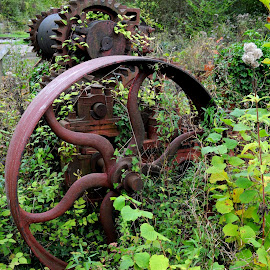 Rust in the Undergrowth by DJ Cockburn - Artistic Objects Technology Objects ( west sussex, machinery, overgrown, wheel, vintage, amberley, amberley museum & heritage centre, spokes, england, industrial, derelict, rust, antique )