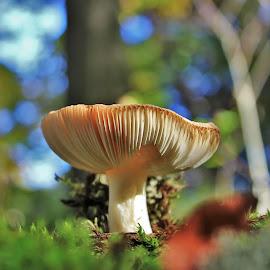 Autumn Toadstool by Carolyn Taylor - Nature Up Close Mushrooms & Fungi