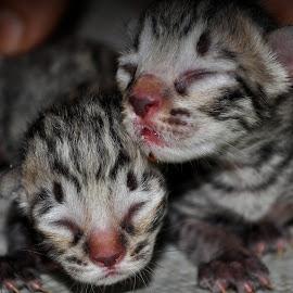 by Parvesh Rana - Animals - Cats Kittens