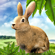 Rabbit Hunting Challenge : The Game