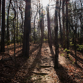 Smithgall Woods by Richard Michael Lingo - Landscapes Forests ( forest, woods, smithgall woods, trees, landscape )