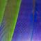 Macro Feathers 28 01 18.jpg