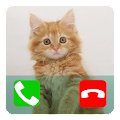 Talking Cat Calling Prank APK for Kindle Fire