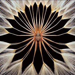 dandelion abstract.jpg