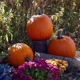 Pumpkins by Lynn Andrasko - Public Holidays Halloween