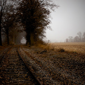 Misty Rails 005 by Chris Taylor - Transportation Trains ( rails, horizon, tracks, travel, morning, leaves, leading lines, autumn, fog, trees, trains, mist, fields )