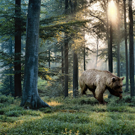 Bear in the Woods by Leslie Collins - Digital Art Places ( bear, digital art, trees, place, light, woods, rays )