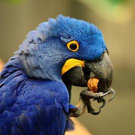 Tu veux ma noix ? by Gérard CHATENET - Animals Birds (  )