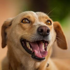 by Sadatul Islam - Animals - Dogs Portraits ( #dog, #dogportrait, #chika, #bamboorustles )