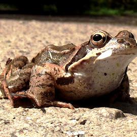 by László Nagy - Animals Amphibians