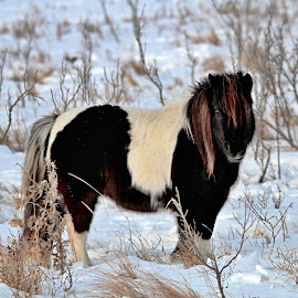 Nice Hair by Bob Bissonette - Animals Horses ( horse )