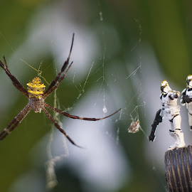 The Clonetroopers found a Giant Spider by Risnandar Salam - Novices Only Macro