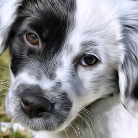 Mowgli the Man Cub Painted by Anna Carneal - Digital Art Animals ( border collie, painterly, grass, black and white puppy, black and white dog, puppy, backyard )