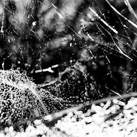 by Irena Elezovic - Abstract Macro ( black and white, beautiful, nature up close, diagonal, web )