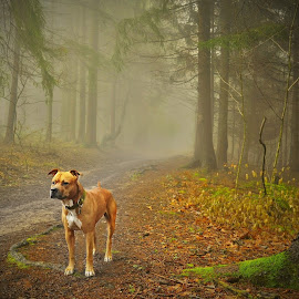 GINO by Jojo Pried-Horsky - Animals - Dogs Portraits ( erikaarichard, amstaff, dog, slovakia, friend, animal )