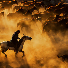 cowboy by Feyzullah Tunç - Animals Horses ( #herd #running #horse #flock #gold #smoke #golden #run #documentary #haze #horses )