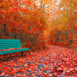 Red fall carpet by Francois Noiseux - Landscapes Mountains & Hills ( red, bench, wood, fall, trees, relaxation, leaf )