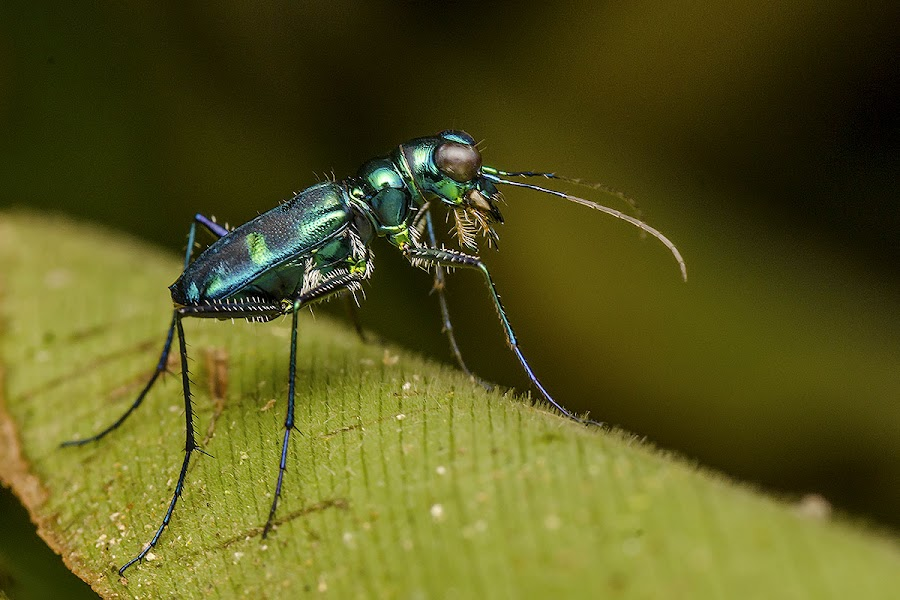 looking something ? by Marcus Kam - Animals Insects & Spiders ( macro )