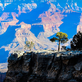 Grand Canyon by Anatoliy Kosterev - Landscapes Mountains & Hills ( tree, landscape, rocks, shadows, grand canyon )