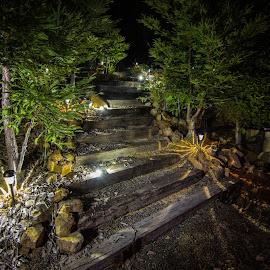 Steps at Night by Mark Franks - City,  Street & Park  Night ( lights, trees, night, steps, glow )