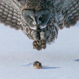 by Tom Samuelson - Animals Birds