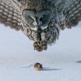 by Tom Samuelson - Animals Birds (  )