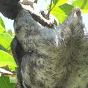 Sloth Arthropods