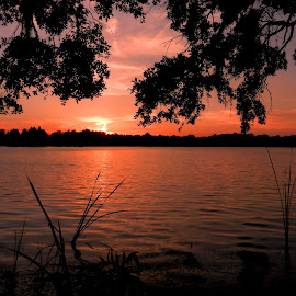 Sunset at the Lake by Kathy Rose Willis - Landscapes Sunsets & Sunrises ( water, orange, silhouette, florida, sunset, lake )