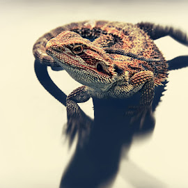 by Lay Sulaiman - Animals Reptiles
