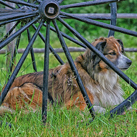 Between the Spokes by Twin Wranglers Baker - Animals - Dogs Portraits
