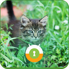Tiger Cat In Grass Wall & Lock