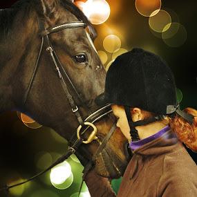 by Simon Lambert - Animals Horses