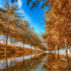 autumn abstract 2 by Egon Zitter - Digital Art Places ( reflection, blue, autumn, fall, trees, yellow, depth )