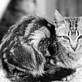 Cat by Gil Reis - Animals - Cats Portraits ( cats, nature, street, places, portugal )
