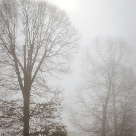 Trees in Foggy Weather by Christy Stanford - Landscapes Weather ( foggy, winter, nature, fog, weather, trees )